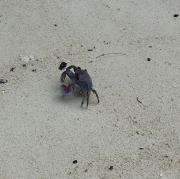 Krebs am Strand vom Hotel